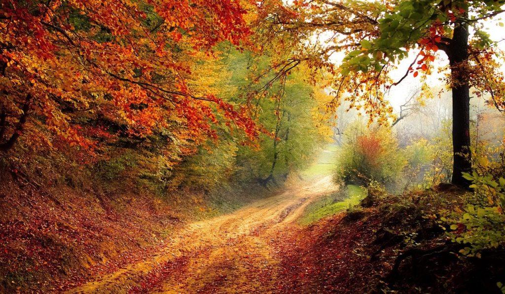 bosque lleno de colores